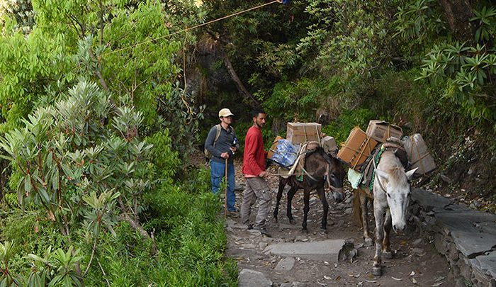 horses and donkeys at the holy mountains in himalaya at shree hari yoga rishikesh